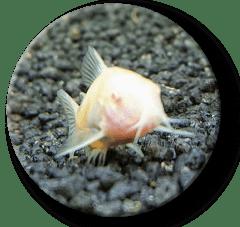UK FishKeeping