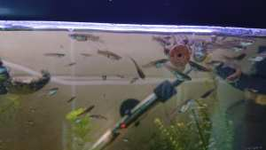 Cycling Your Fish Tank /  Aquarium