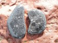 Crinoidal limesone pebbles