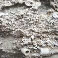 Excellent crinoid fossils