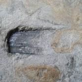 Imprint of wood in sandstone boulder