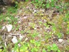 Scree and undergrowth