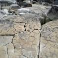 Fossil dehydration cracks