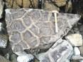 Fossil mud cracks