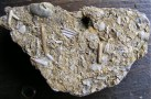 Forest marble fossils