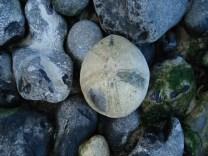 Flint Echinocorys scutata urchin