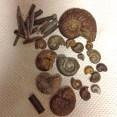 Ammonites and belemnites from Tidmoor Point, Dorset