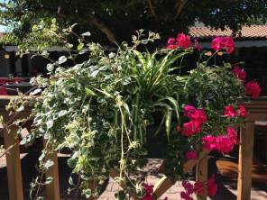 terrasse-en-fleurs