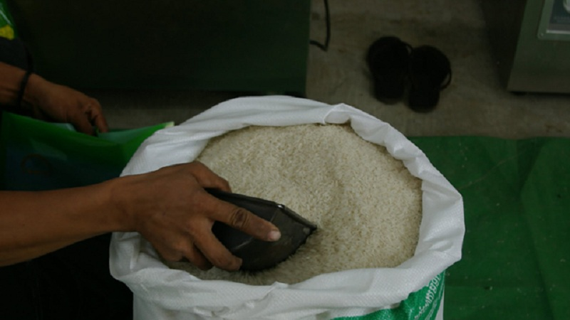 rice distribution web