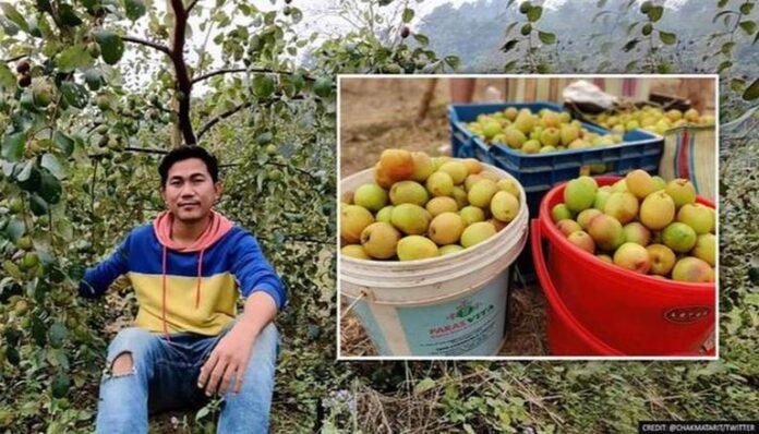 Apple Ber Tripura 696x398 1