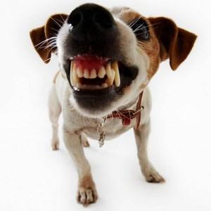 growlingdog