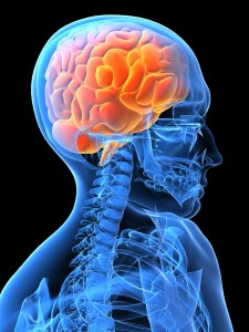 brain-in-head