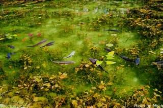 シモネの池03