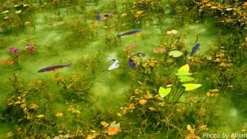 シモネの池01