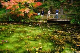 シモネの池11