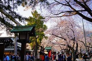 靖国神社・桜08