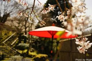白龍園・桜05