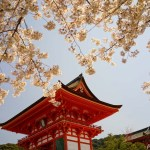京都の定番1 ~清水寺の桜(昼と夜の違う世界を楽しむ)~