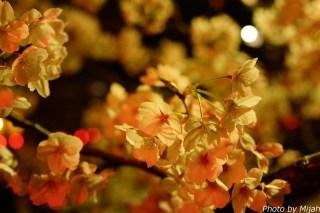 東京夜桜03
