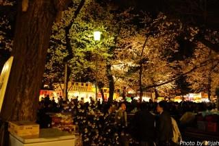 東京夜桜18
