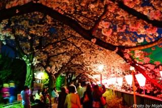 東京夜桜07