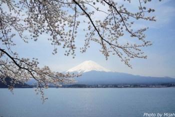 河口湖・桜01