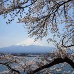 春の河口湖 ~富士山と湖と桜~