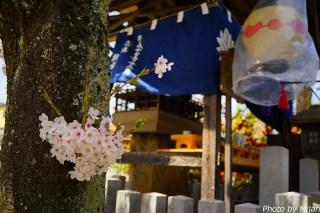 takayamamatsuri19