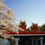 日本三大美祭・春の高山祭 ~桜舞う小京都と迫力の祭屋台~