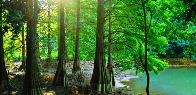 ジブリで見たような幻想世界 福岡県「篠栗九大の森」(夏・池水位低時)