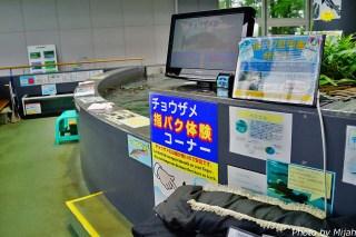 salmon-museum21