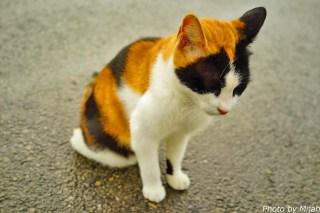taketomi-cat05