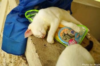 taketomi-cat14
