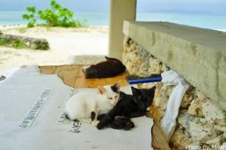 taketomi-cat17