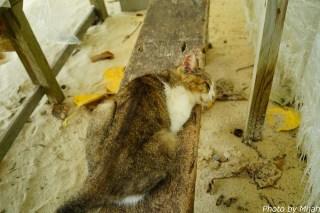 taketomi-cat19