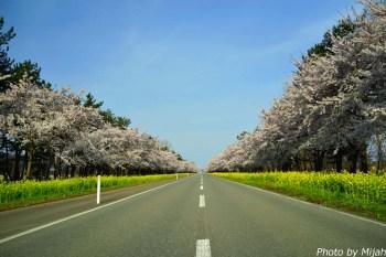nanohana-road02