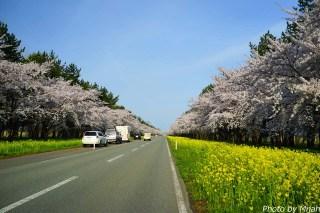 nanohana-road03