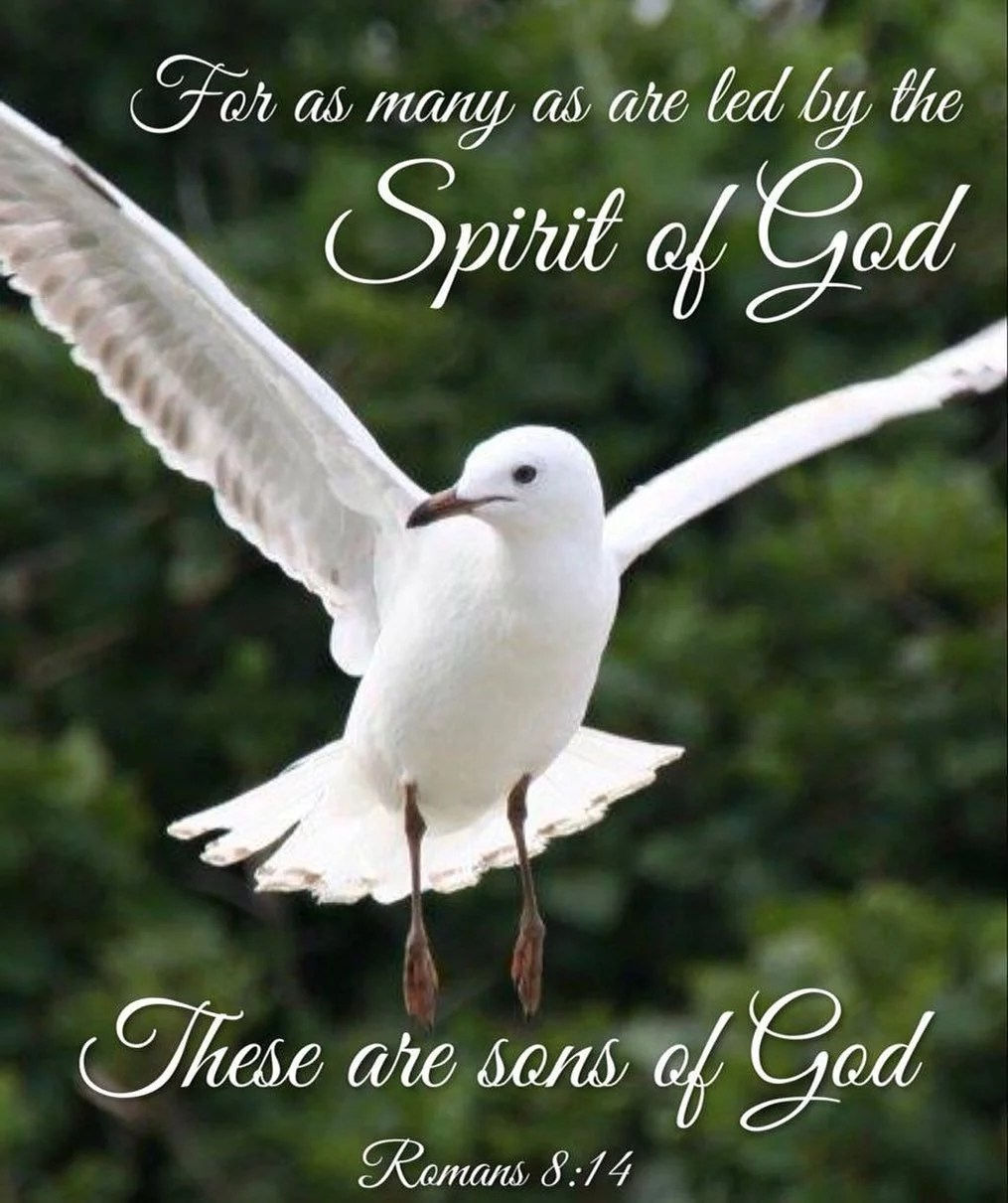 A greedy soul is deprived of wisdom but a compassionate soul is made wise by the Spirit. - St. Isaac the Syrian #christian #orthodox #spirit
