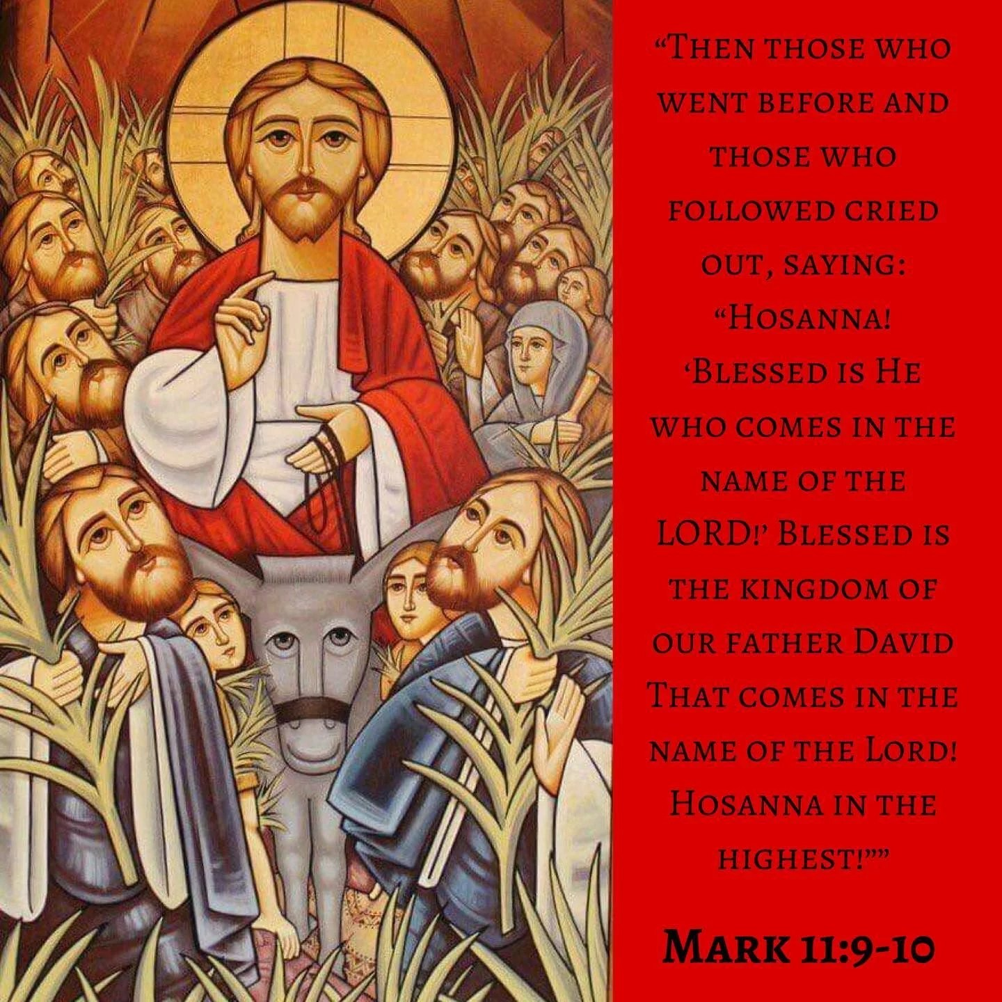 "Palm Sunday   ""Palm Sunday is the Day where the Kingdom of the Earth with its Palms the Kingdom of Animals with the Donkey and the Kingdom of Men with their hymns and procession are all United in Christ welcoming him into Jerusalem"" - H.H. Pope Tawadros II  #coptic #orthodox #palmsunday #blessed #hosanna #holypashca"