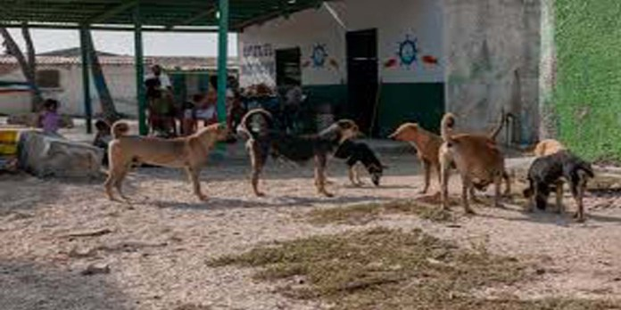 stray dogs in pakistan