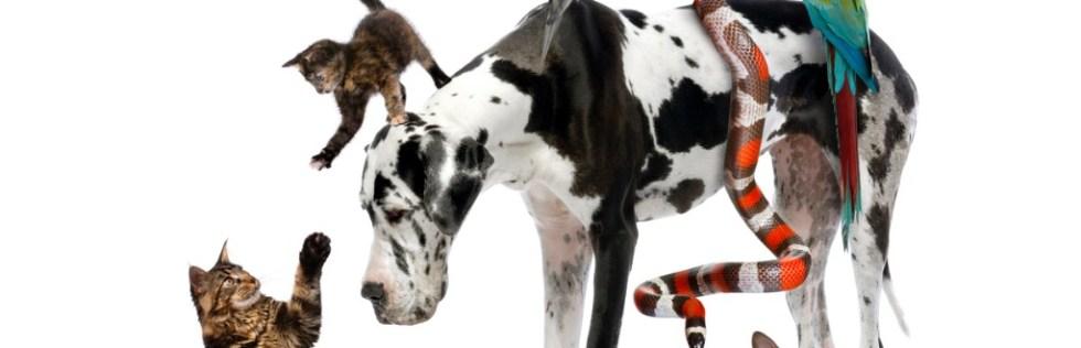 Animal Care Course Level 2 Award - Endorsed UK Open College