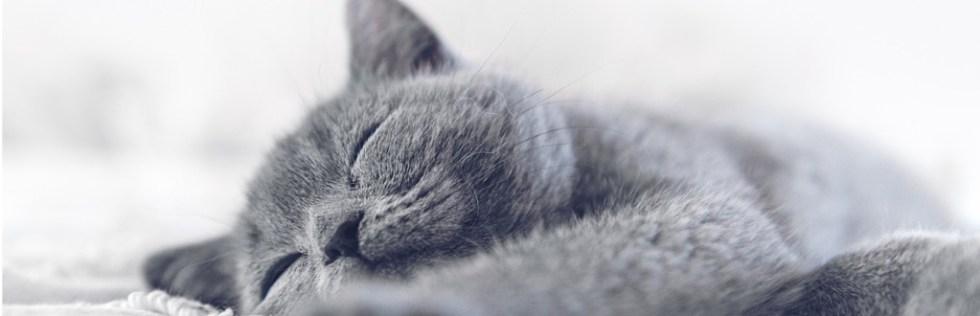 Feline Studies Course Level 3 - Endorsed UK Open College