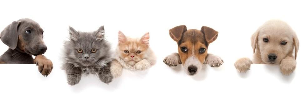 Domestic Animal Care Course Level 3 - Endorsed UK Open College