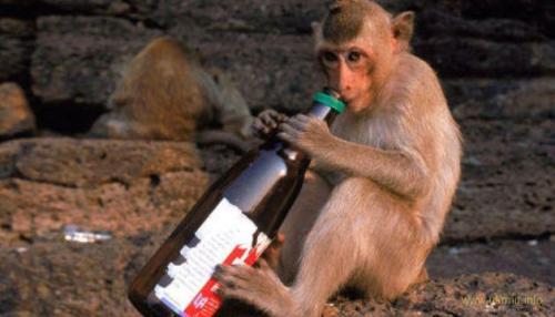 Алкоголь улучшает память, но в итоге разрушает мозг - ученые