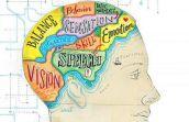 human brain memory (память человека)