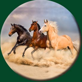 horses-wheelcover