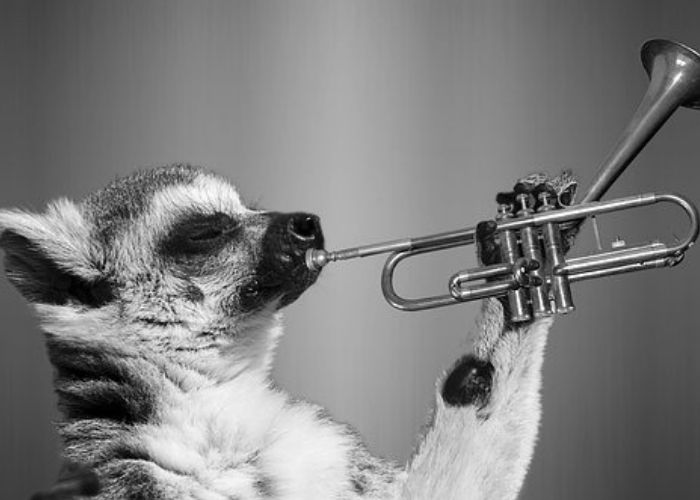 It's time to blow your own trumpet