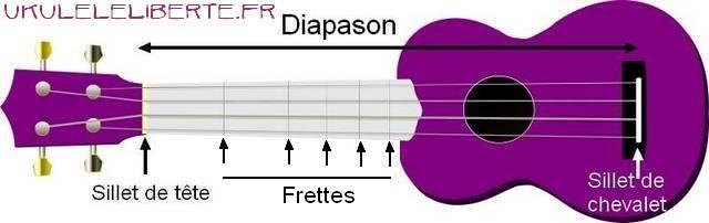 choisir votre premier ukulele