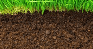 Pengaruh pH Terhadap Tanah