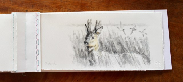 A roe deer pencil sketch from a March sketchbook